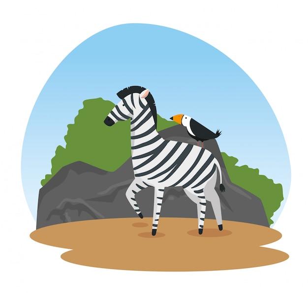 Reserva de animais selvagens de zebra e pássaros