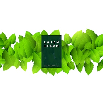 Resumo folhas verdes fundo da natureza