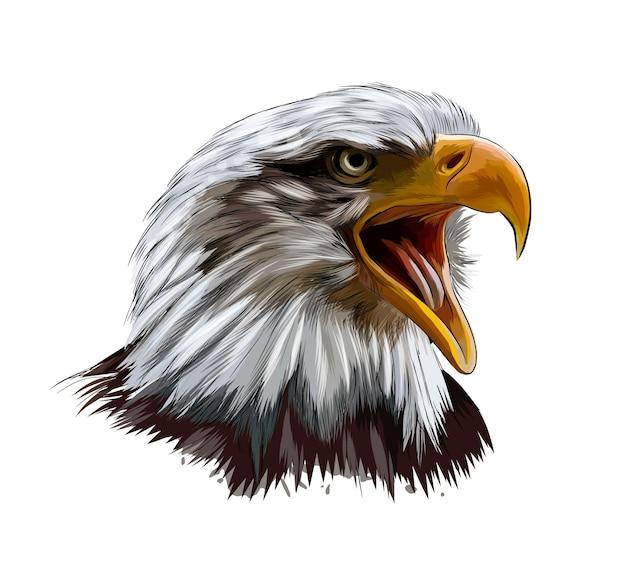 Retrato da cabeça da águia careca de um toque de aquarela, desenho colorido.