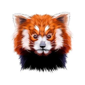 Retrato da cabeça de um pequeno panda vermelho de tintas multicoloridas desenho colorido realista