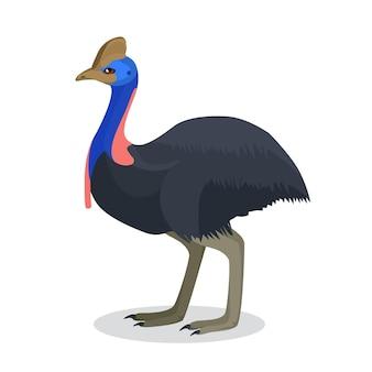 Retrato de corpo inteiro de avestruz australiana preta com cabeça azul e rosa brilhante e pescoço isolado no branco. ilustração de animal em pé sobre duas patas com asas que não podem voar em design plano