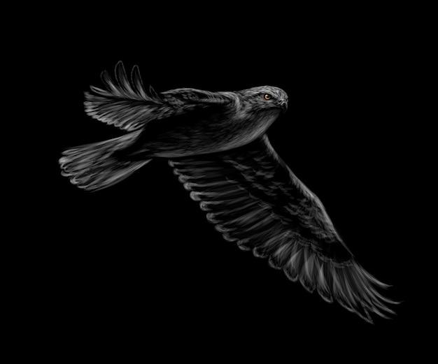 Retrato de um falcão voador em um fundo preto. ilustração