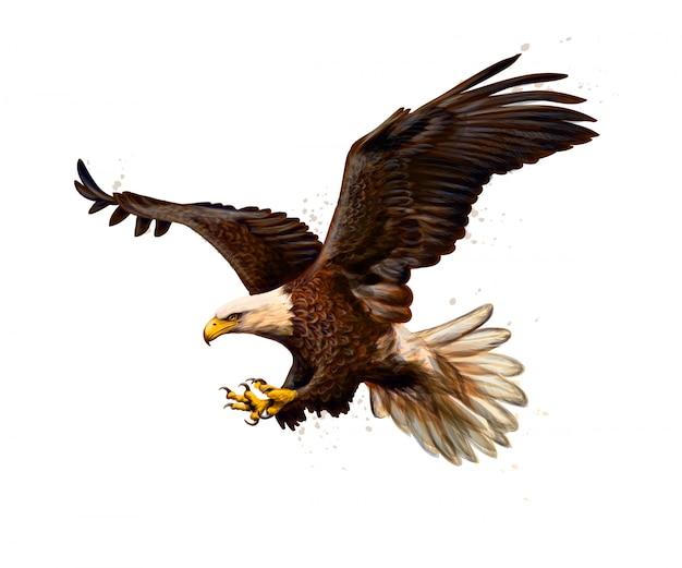 Retrato de uma águia careca de um toque de aquarela, esboço desenhado à mão. ilustração de tintas