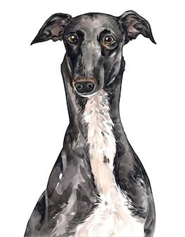 Retrato em aquarela de galgo de cachorro pintado à mão