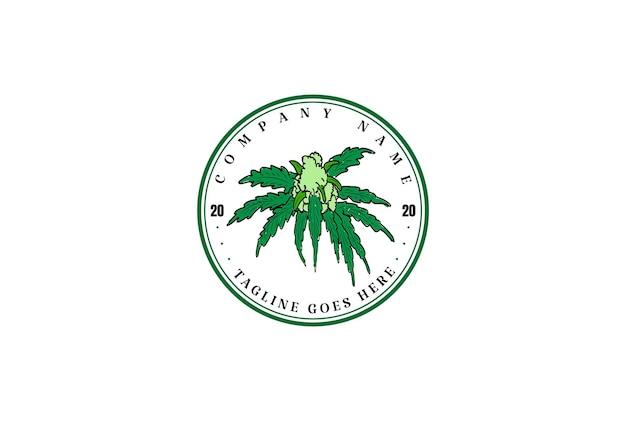 Retro vintage cannabis marijuana cânhamo cbd óleo design de logotipo em vetor