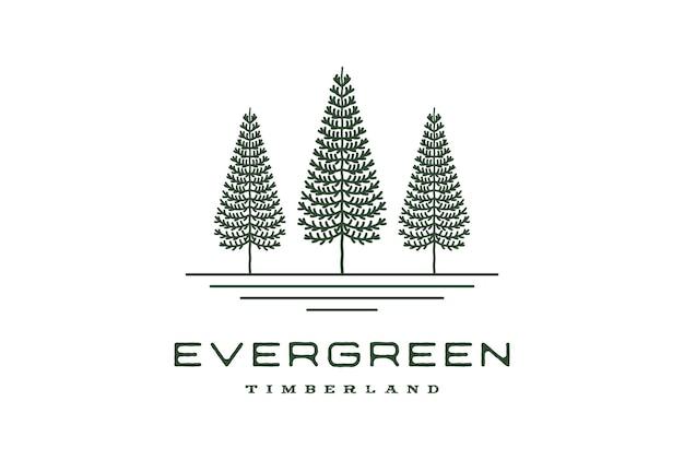 Retro vintage hipster linha arte pinheiro evergreen abeto cicuta spruce conífera cedro coníferas cypress lariço árvores florestas logo design vector