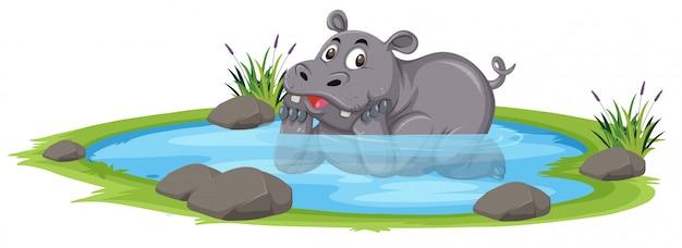 Rinoceronte fofo na lagoa