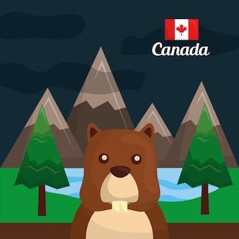 Roedor do castor de canadá nas montanhas da floresta