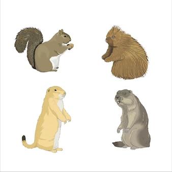 Roedores de esquilo de lontra