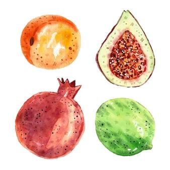 Romã, figo, limão, damasco. clip-art de frutas tropicais, conjunto. ilustração em aquarela. alimentos saudáveis frescos crus. vegano, vegetariano. verão.