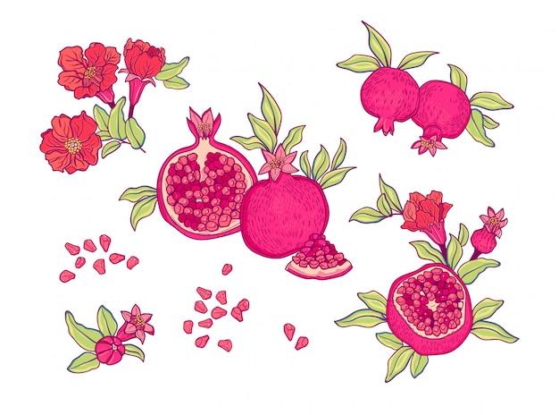 Romã isolada. fruta tropical. conjunto com frutas e flores de romã.