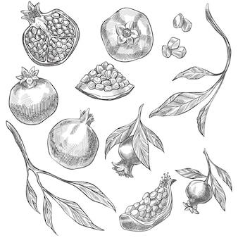Romã madura deliciosa, desenho isolado de frutas, ramos e folhas