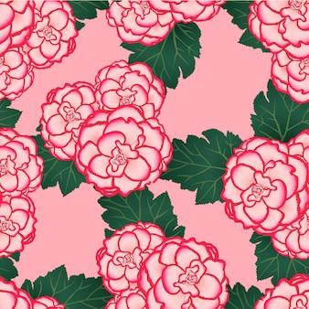 Rosa begônia flor picotee primeiro amor em fundo rosa