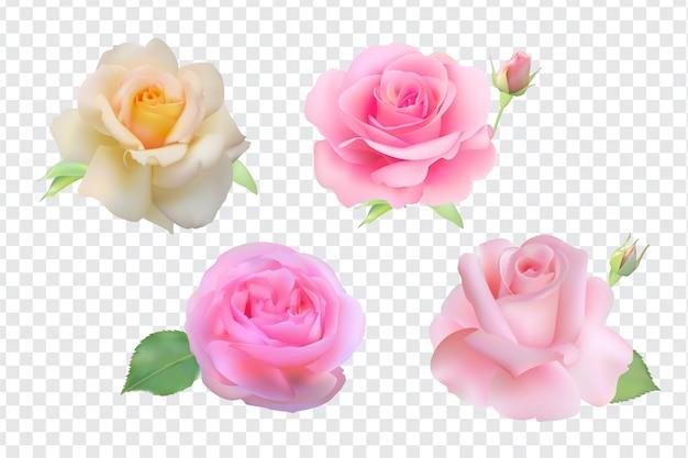 Rosa conjunto isolado