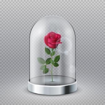 Rosa em cúpula de vidro. bela flor vermelha isolada sob o frasco transparente. símbolo de conto de fadas, ilustração em vetor beleza decoração de interiores. rosa desabrochando sob um vidro, flor em cúpula de frasco