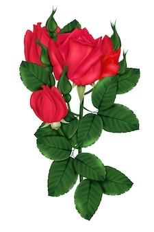 Rosa escarlate com tons brilhantes
