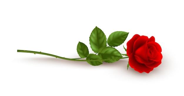 Rosa vermelha realista deitada sobre fundo branco.
