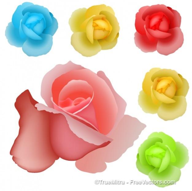 Rosas coloridas desenho vetorial