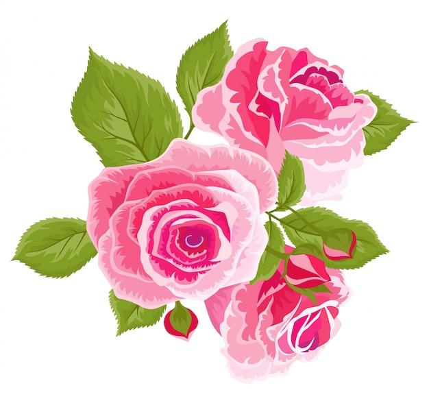 Rosas cor de rosa e botões. conjunto de flores vintage