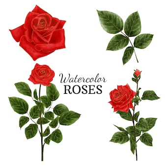 Rosas em aquarela