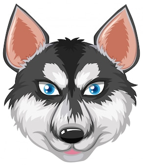 Rosto, de, husky siberiano
