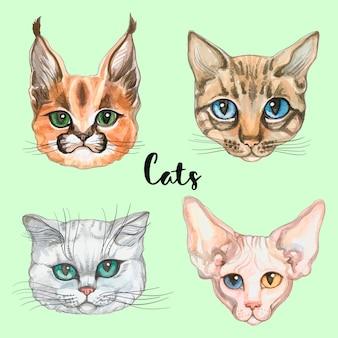 Rostos de gatos de raças diferentes. conjunto.