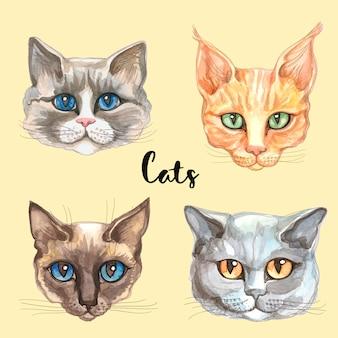 Rostos de gatos de raças diferentes