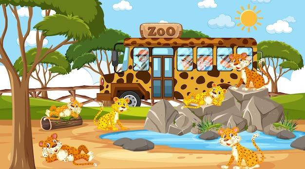 Safari durante o dia com muitas crianças assistindo o grupo de leopardos