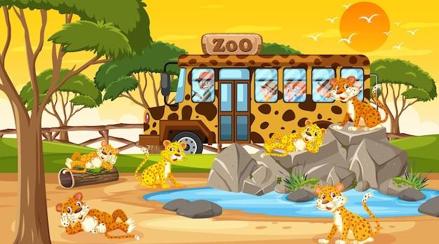 Safari na cena do pôr do sol com muitas crianças observando o grupo de leopardos