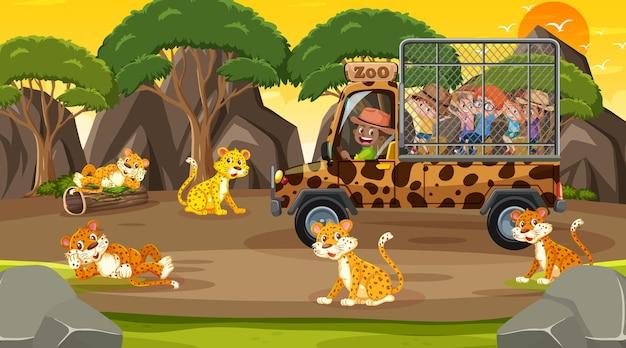 Safari na hora do pôr do sol com muitas crianças observando o grupo de leopardos