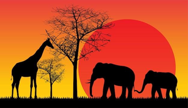Safari vida selvagem áfrica pôr do sol animais isolados vetor