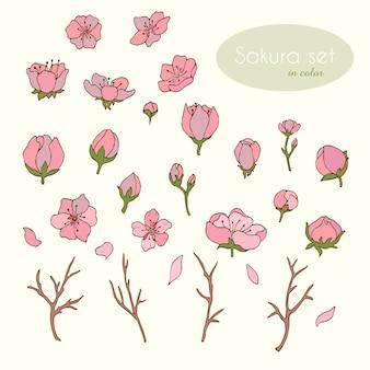 Sakura definida em cores. flores. cereja. sakura. ilustração vetorial. vetor. vetor de estoque. conjunto de itens. pétalas