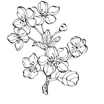 Sakura desenhada à mão