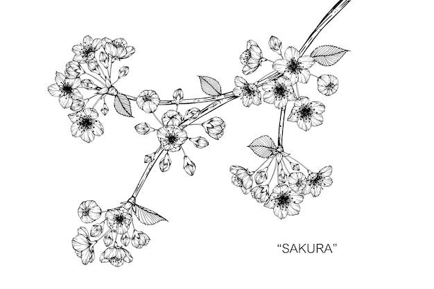 Sakura flor desenho ilustração