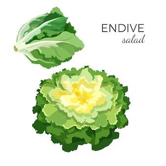Salada de endívia fresca orgânica