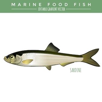Sardinha. peixes marinhos