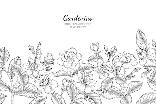 Seamless pattern gardenias flor e folha mão desenhada ilustração botânica com arte de linha.