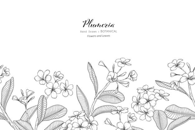 Seamless pattern plumeria flor e folha mão desenhada ilustração botânica com arte de linha.