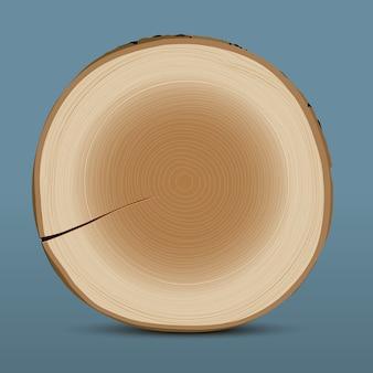 Seção transversal de tronco de árvore