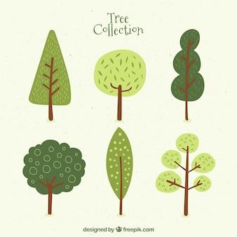 Seis árvores bonitos