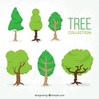 Seis árvores frondosas