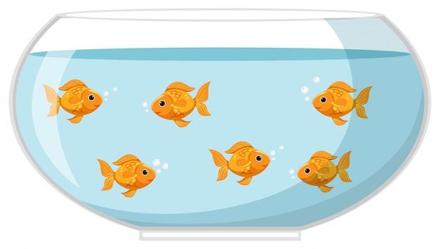 Seis peixes dourados na tigela