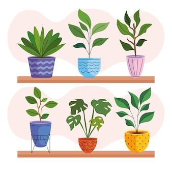 Seis plantas caseiras em vasos de cerâmica sobre prateleiras