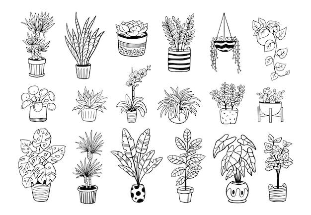 Seleção de plantas caseiras desenhadas à mão