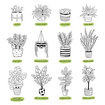 Seleção de plantas caseiras em estilo doodle