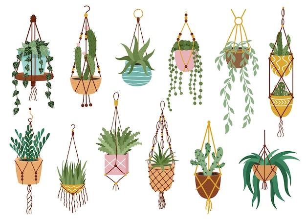Seleção de plantas em vasos