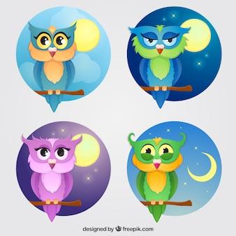 Seleção de quatro corujas coloridas com fundos diferentes