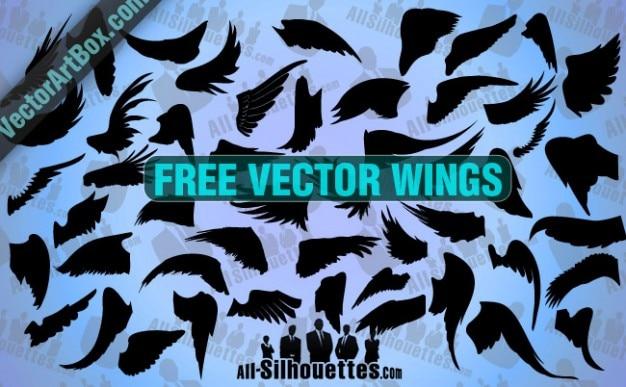 Sem asas vector