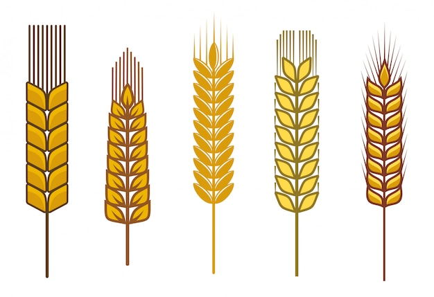 Sementes de cereais e símbolos isolados no branco