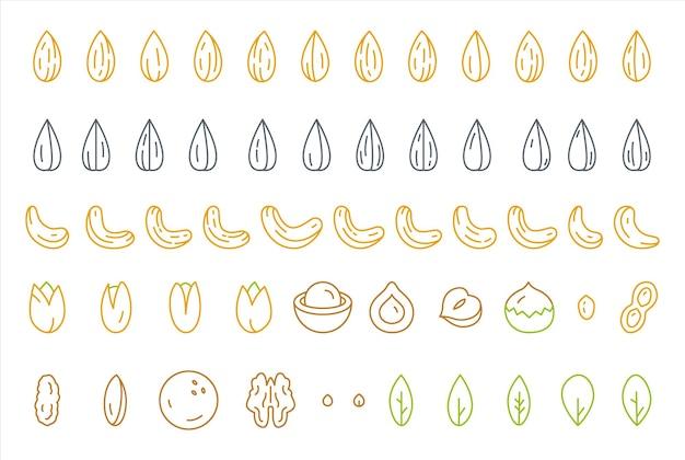 Sementes de nozes e folhas verdes ilustração de linha fina